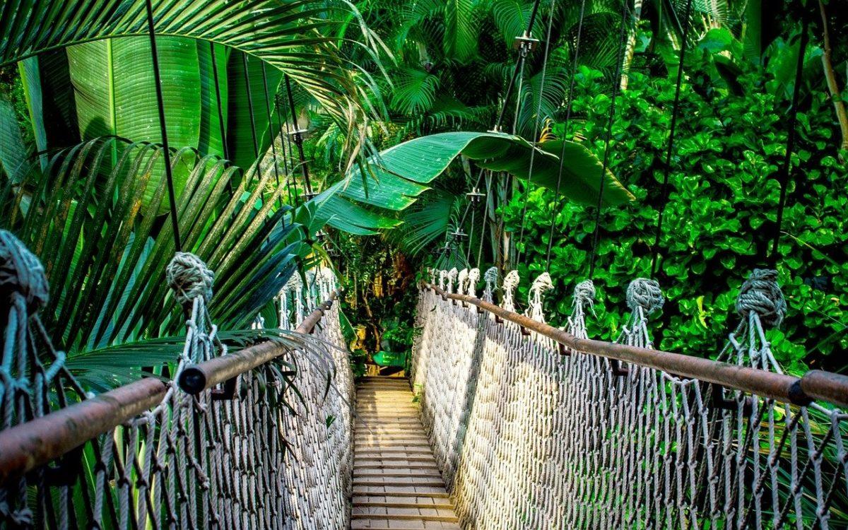 Regenwald retten